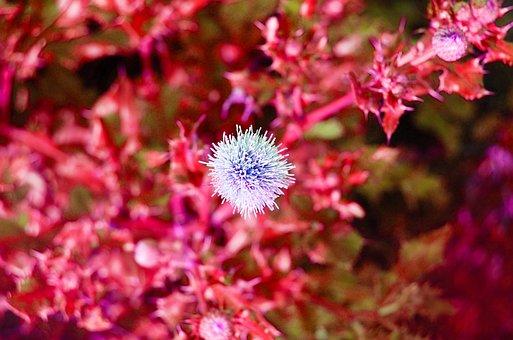 Flowers, Nature, Bokeh, Floral, Garden, Outdoor
