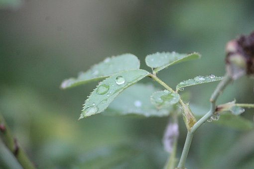 Rainy Day, Rain, Plant, Dew, Nature, Leaf, Outdoor