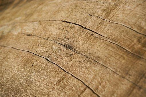 Abstract, Texture, Tree, Macro, Pattern, Detail, Nobody