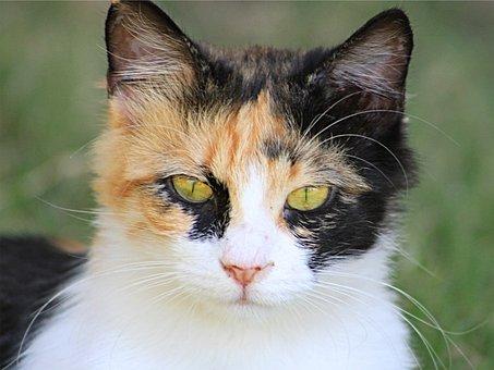 Cat, Domestic Cat, Portrait Of Cat, Kitten, Portrait