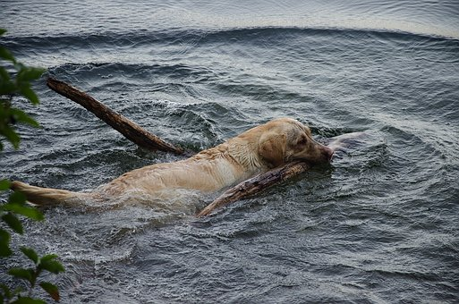 Dog, Water, Swim, Wet, Play, Joy, Beach, Cooling