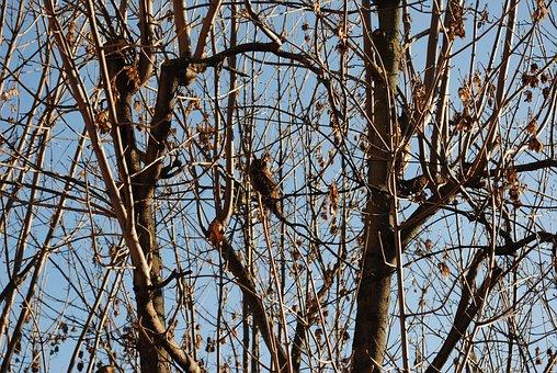Owl, Animal, Tree Brown, Winter, Wildlife, Wild, Nature