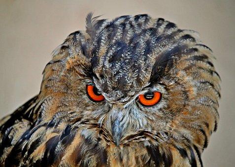 Owl, Eagle Owl, Bird, Animal, Bird Of Prey, Feather