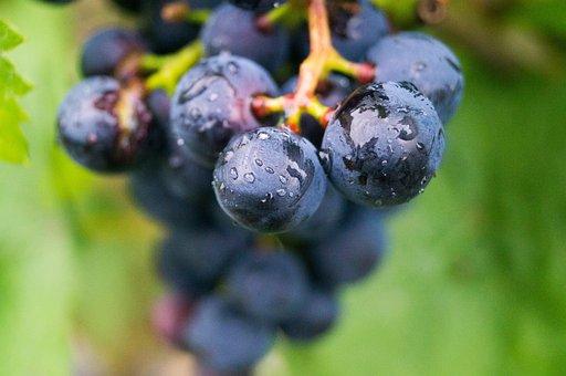 Grape, Wine, Festival, Cultivation, Economy, Blue, Eat