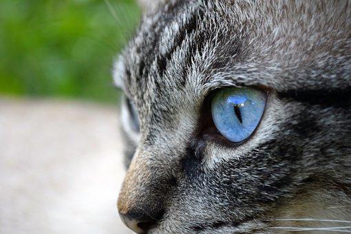 Cat, Eye, Animal, Domestic Cat, Adidas, Cat's Eyes, Pet