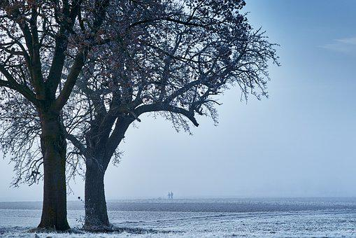 Blue, Cold, Winter, Snow, Wintry, Frost, Snow Landscape