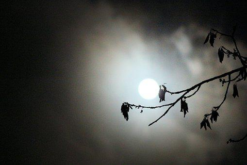 Fullmoon, Make, Cloud, Night, Tree, Background, Light