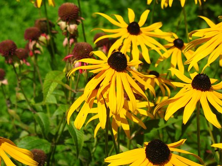 Flowers, Autumn, Summer, Nature, Plant, Garden