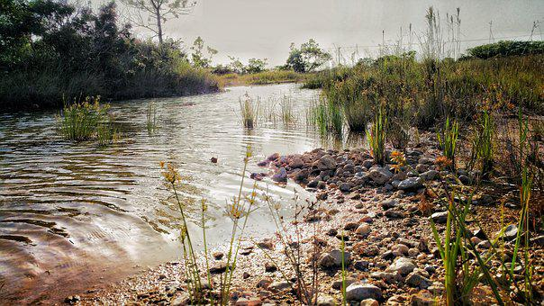 Belize, Brook, Creek, Water, Ripples, Grass, Reflection