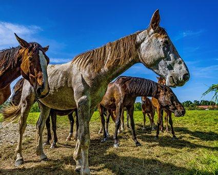 Horses, Horse, Pasture, Nature, Horse Head, Animal