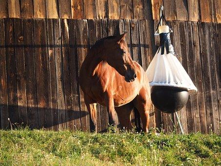 Horse, Animal, Nature, Horse Head, Pferdeportrait, Mold