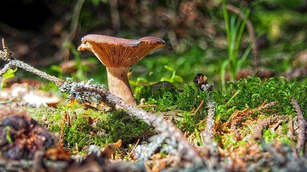 Mushroom, Mushrooms, Litter, Forest, Forest Litter