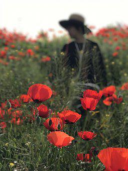 Poppies, The Imaginary Of The People, Natural