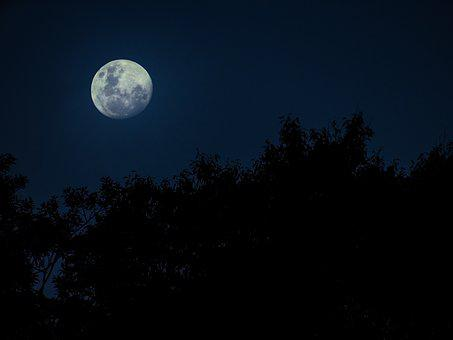 Moon, Trees, Nature, Sky, Silhouette, Night, Blue Sky