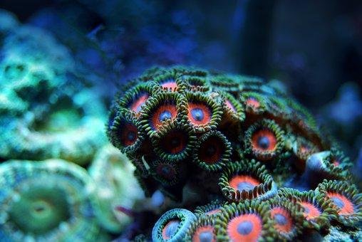 Coral, Reef, Sea, Underwater, Water, Marine, Tropical