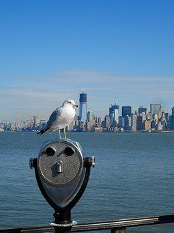 Seagull, Manhattan, New York, Water, Usa