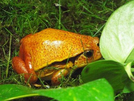 The Frog, Zoo, Amphibians