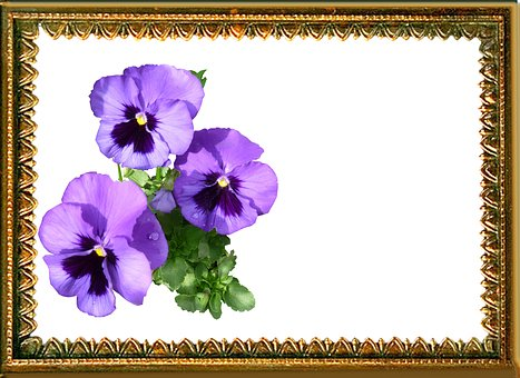 Greeting Card, Pansy, Bunch