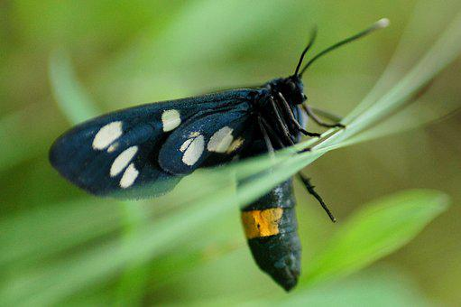 Butterfly, Bug, Fauna, Nature