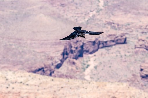 Bird, Flight, Canyon, Mountains, Gorge, Wide, Fly