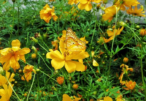 Butterfly, Golden, Wings, Matching Color, Flower's