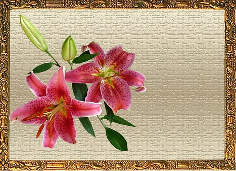 Greeting Card, Pink, Lily
