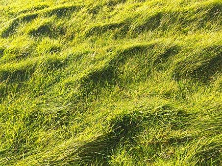Grasses, Grass, Nature, Green, Plant, Game Grass
