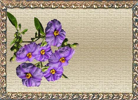Greeting Card, Purple, Flower