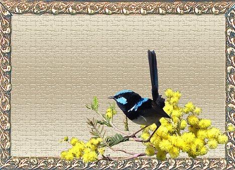 Greeting Card, Wren, Wattle