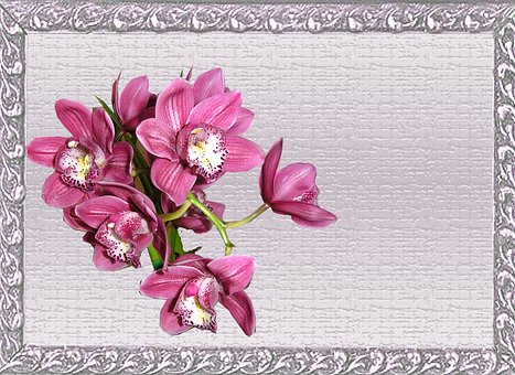 Greeting Card, Pink, Orchid