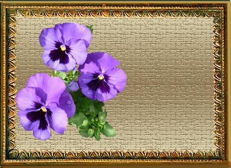 Greeting Card, Purple, Pansies