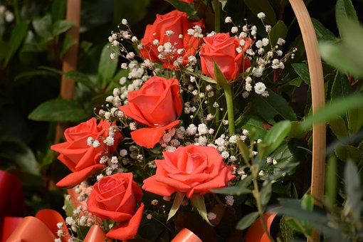 Red Rose, Flowers, Rose, The Wild, Powder, Pink Flowers