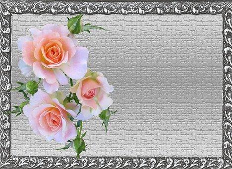 Greeting Card, Pink, Rose
