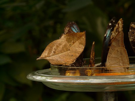 Butterflies, Butterfly House, Sugar Water, Feeding