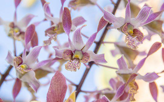 Orchid, Flower, Pink, Tropical, Isolated, Background