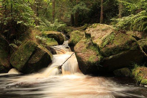 Water, Fast Rocks, Trees, Moss Fern, Flowing Water