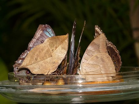 Butterflies, Butterfly House, Sugar Water, Feeding