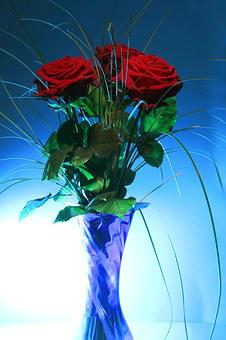 Rose, Vase, Blue, Light, Back Light, Pink Rose, Salmon