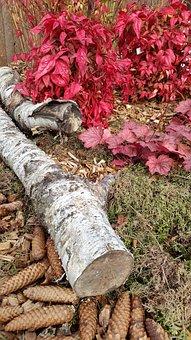 Birch, Moss, Garden, Bush, Blütten, Meadow, Yellow
