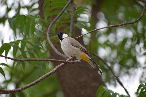 Nature, Bird, Tree, Wildlife, Animal, Wild, Natural