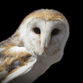 Owl, Eagle Owl, Barn Owl, Bird, Bird Of Prey, Bill
