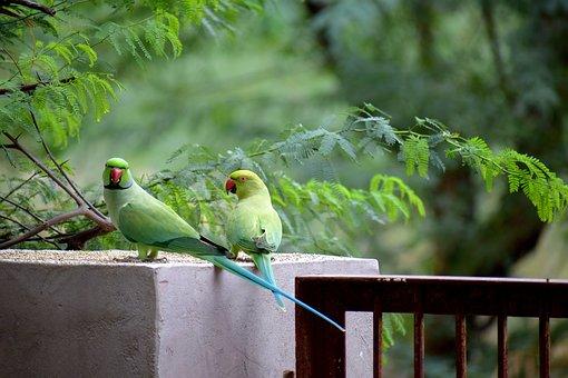 Bird, Parrot, Green, Nature, Animal, Wild, Exotic