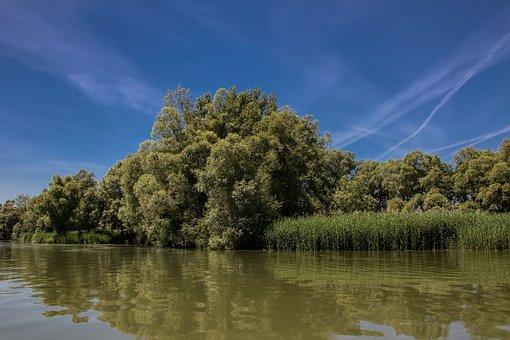 Danube, Slovakia, Nature, River, Bratislava, Trees