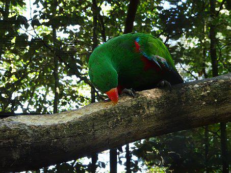 Parrot, Green, Colorful