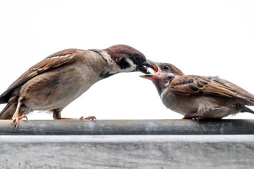Sparrow, Feeding, Nature, Wildlife, Wild, Bird, Feather