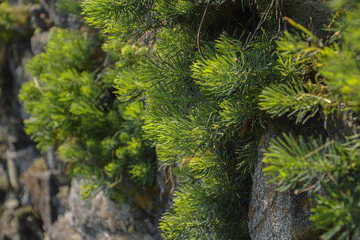 Plant, Fouling, Green, Summer, Nature, Moss, Grass