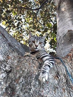Tree, Cat, Pet, Domestic, Kitty, Nature, Cute, Tabby