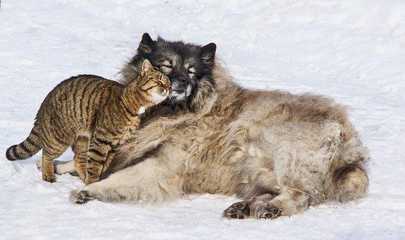 Love, Dog, Cat, Together, Animal, Fur, Nature, Sweet