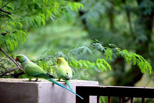 Parrots, Birds, Nature, Animal, Wild, Exotic, Wildlife