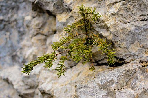Plant, Rock, Stones, Nature, Forest, Green, Wall